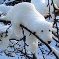 У новорічну ніч Україну замете снігом