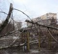 Екологи озвучили вартість зрізаних беріз на проспекті Миру в Житомирі