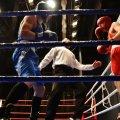 У Бердичеві на регіональний чемпіонат з боксу зібралося майже 150 спортсменів