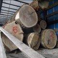 Екологічна інспекція виявила автомобіль, що вивозив із Житомирщини лісопродукцію без належних документів. Фото