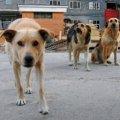 В одному з райцентрів Житомирської області мисливці відстріляли 12 безпритульних собак