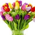 Привітання Юрія Павленка зі святом 8 березня. ВІДЕО