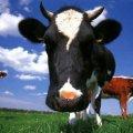 На Житомирщині селяни повстали проти фермера