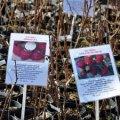 В Житомирській області планують збільшити вирощування плодово-ягідних культур.