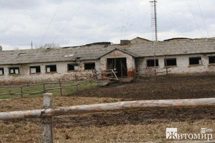 Чому реве худоба на фермі Розенблата?
