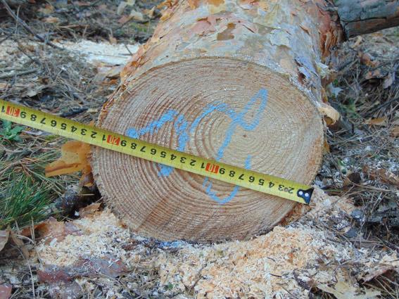 В Коростенському районі затримали групу незаконних лісорубів