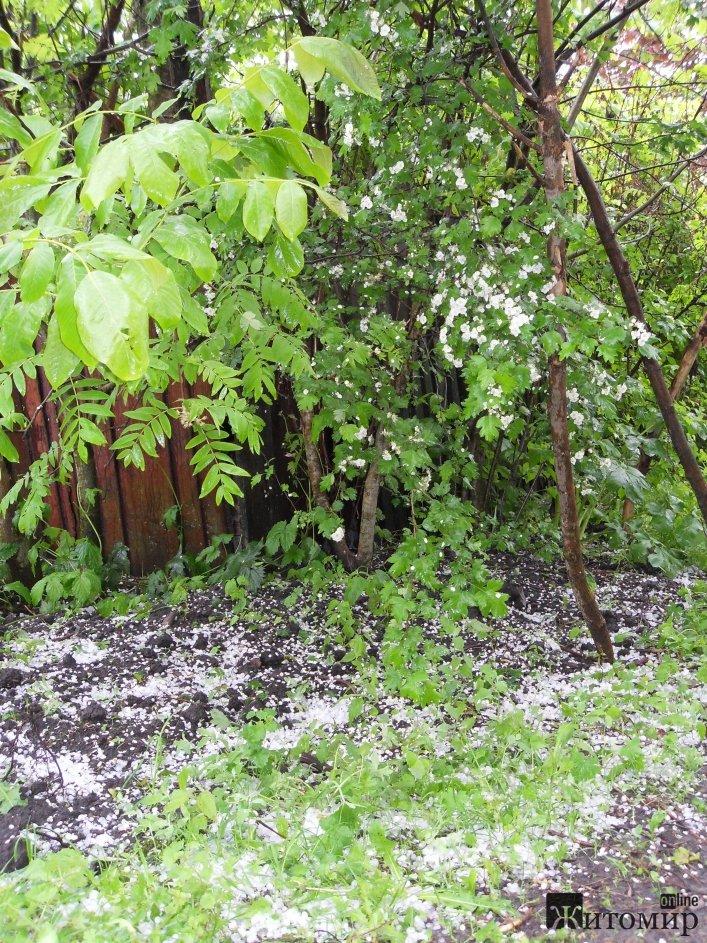 Житомирську область на вихідних засипало градом. ФОТО