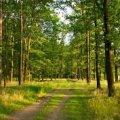На Житомирщині суд повернув до державної власності 6,8 га земель лісового фонду