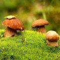 У Житомирі маленька дівчинка отруїлася грибами