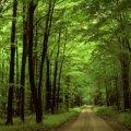 Житомирщина є третьою в Україні за площею лісів. Інфографіка