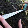 На Житомирщині киянин незаконно орендував 12 земельних ділянок площею 252 га