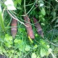 На Житомирщині чоловік натрапив на мінометні міни, коли збирав ягоди