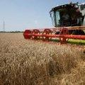 Стан збору урожаю зернових на Житомирщині