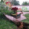 У Народицькому районі через порив вітру дерево впало на дитячий майданчик