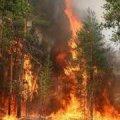 Радомишльські лісівники приборкували лісову пожежу