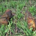 В Житомирському районі грибник знайшов вибухонебезпечний предмет