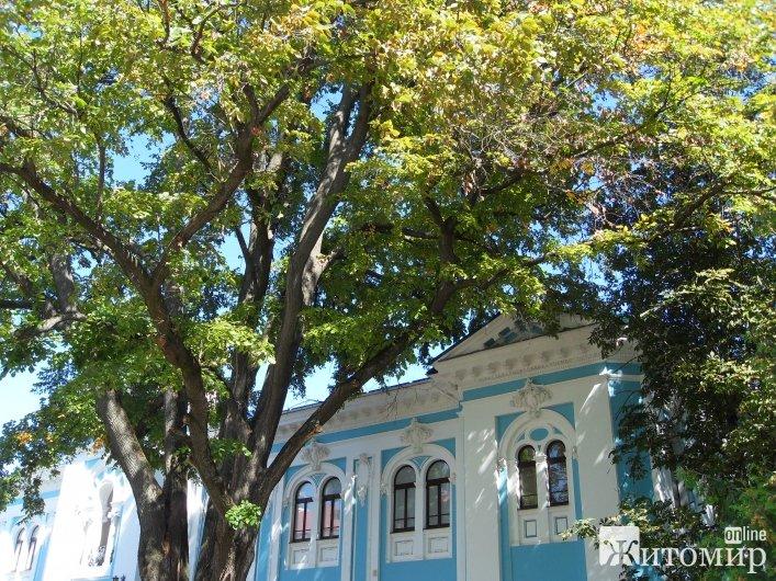У Житомирі біля краєзнавчого музею з'явилося аварійне дерево