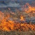 В Олевському районі горить суха трава