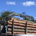 В Денишах затримали вантажівку, якою перевозили деревину без документів