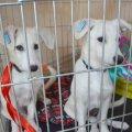 Центр защиты животных за месяц стерилизовал в Житомире более 400 собак