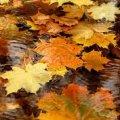 Погода в Житомире и Житомирской области пятницу, 11 ноября