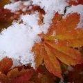 Погода в Житомире и Житомирской области пятницу, 25 ноября