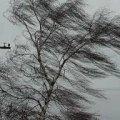 Жителів Житомирщини попереджають про пориви вітру та не радять бути обережними на вулиці