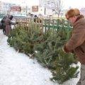 У Житомирській області новорічну ялинку можна буде придбати за 20-170 грн.