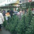 У Житомирській області цьогоріч виростили майже 670 тисяч новорічних ялинок