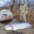 В Одесской области убили двухметровую белугу, занесенную в Красную книгу. ФОТО.