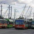 У Житомирі на Водохреща збільшили кількість тролейбусів, які курсують до Гідропарку