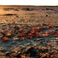 Суд припинив нецільове використання 4 га «бурштинових» земель у Житомирській області