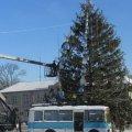 У райцентрі Житомирської області 18-метрову новорічну ялинку розпиляли на дощечки для дитячої творчості