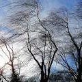 Жителів Житомирської області попереджають про дводенні пориви вітру