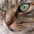 Весна розпочалася зі Всесвітнього дня котів
