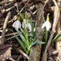 Погода в Житомире и Житомирской области на выходные, 4 и 5 марта