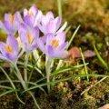 Погода в Житомире и Житомирской области пятницу, 10 марта