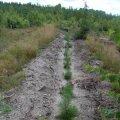 Весною у Житомирській області готуються висадити 4,5 тис. гектарів лісу