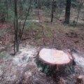 В Овруцькому районі викрили 24-річного підпільного лісоруба