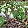 Погода в Житомире и Житомирской области на выходные, 18 и 19 марта