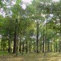 У Коростишівському районі Вищий господарський суд заборонив помічнику нардепа користуватися 6,6 га лісу