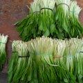 У Житомирі пропонують вітамінну альтернативу тепличним овочам – черемшу, руколу та шпинат
