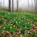 Погода в Житомире и Житомирской области на выходные, 25 и 26 марта