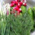 У ранніх овочах з житомирського Житнього ринку «зашкалюють» нітрати, - лабораторний центр