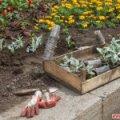 На озеленення центру Житомира цього року виділили понад 3 млн грн