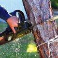 В Житомирській області із «чорних лісорубів» стягнуть майже 220 тис грн завданої довкіллю шкоди