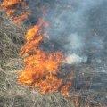 За добу на Житомирщині вигоріло 18 га сухої трави