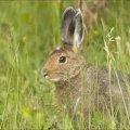 На Житомирщині посилять заходи по охороні диких тварин