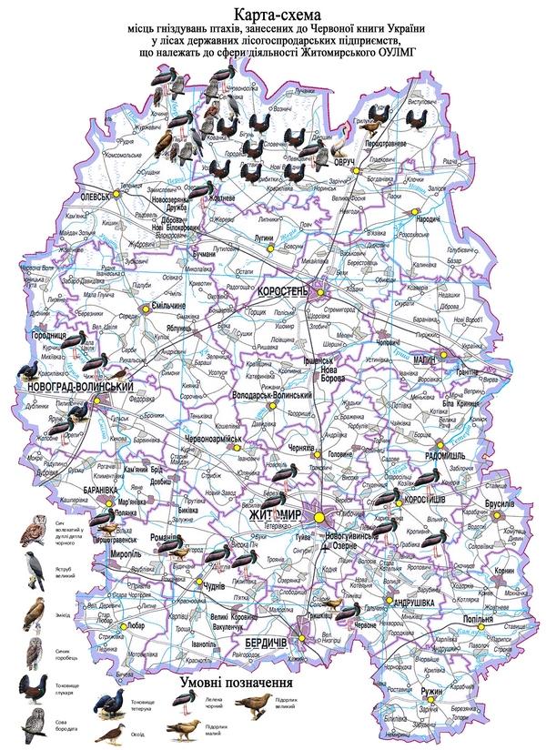 У Житомирській області заради захисту птахів, занесених до Червоної книги, заборонено проводити санітарні заходи по лісах