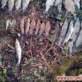 Житомирські прикордонники виявили підпільну нарколабораторію та затримали браконьєра, який наловив риби на 8 тис. грн